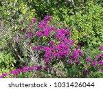 hawaiian flowers on kauai ...   Shutterstock . vector #1031426044