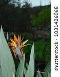 hawaiian flowers on kauai ...   Shutterstock . vector #1031426068