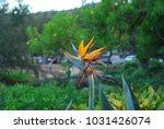 hawaiian flowers on kauai ...   Shutterstock . vector #1031426074