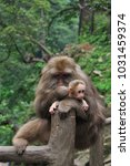Small photo of Monkey maternal love