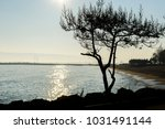 tree silhouette on the beach... | Shutterstock . vector #1031491144