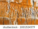 old coconut palm  cocos... | Shutterstock . vector #1031524579