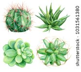 set of cacti and succulent... | Shutterstock . vector #1031561380