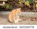 stray cats are very cute | Shutterstock . vector #1031565778