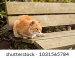 stray cats are very cute | Shutterstock . vector #1031565784