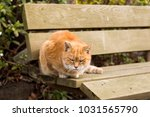 stray cats are very cute | Shutterstock . vector #1031565790