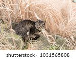 stray cats are very cute | Shutterstock . vector #1031565808