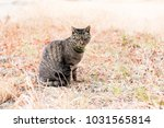 stray cats are very cute | Shutterstock . vector #1031565814