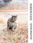 stray cats are very cute | Shutterstock . vector #1031565820