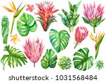 set of tropical plants and... | Shutterstock . vector #1031568484
