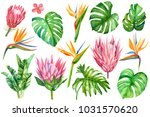 set of tropical plants and... | Shutterstock . vector #1031570620