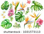 set of tropical plants and... | Shutterstock . vector #1031573113