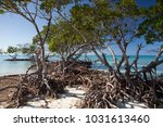 mangroves at caribbean seashore ... | Shutterstock . vector #1031613460