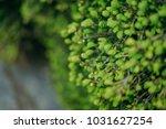 tulip field  spring festival ...   Shutterstock . vector #1031627254
