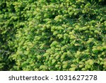 tulip field  spring festival ...   Shutterstock . vector #1031627278