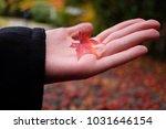 nature outdoor autumnal fall... | Shutterstock . vector #1031646154