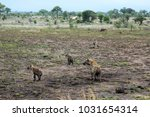 clan of spotted hyenas. | Shutterstock . vector #1031654314