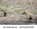 clan of spotted hyenas. | Shutterstock . vector #1031654320