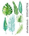 watercolor hand drawn exotic ... | Shutterstock . vector #1031657926