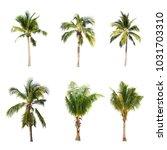 coconut tree on white... | Shutterstock . vector #1031703310