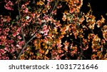 the cherry blossoms of night | Shutterstock . vector #1031721646