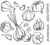garlic  vegetable  vector | Shutterstock .eps vector #1031733970