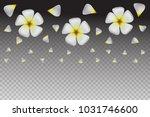 frangipani  plumeria   white...   Shutterstock .eps vector #1031746600