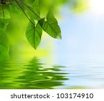 Green Leaves And Reflection In...