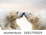 close up of two polar bears in... | Shutterstock . vector #1031753029