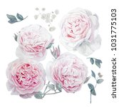 watercolor pink roses for... | Shutterstock . vector #1031775103