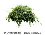 jungle tropical plant bush tree ... | Shutterstock . vector #1031780023