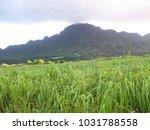 hawaiian landscapes  kauai ...   Shutterstock . vector #1031788558