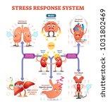 stress response system vector... | Shutterstock .eps vector #1031802469