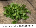 green tops of parsley on a... | Shutterstock . vector #1031872213