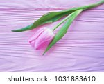 beautiful tulips on a pink... | Shutterstock . vector #1031883610