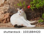 White Cat With Calico Tail...