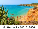 green agave plants on cliff and ...   Shutterstock . vector #1031912884