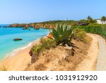green agave plants on cliff and ... | Shutterstock . vector #1031912920