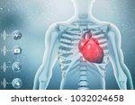 3d illustration  anatomy of...   Shutterstock . vector #1032024658