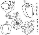 bulgarian pepper  vegetable ... | Shutterstock .eps vector #1032050116