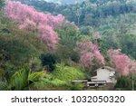 Wild Himalayan Cherry Or Prunus ...