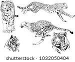 vector drawings sketches... | Shutterstock .eps vector #1032050404