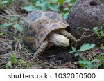 turtle in nature thailand | Shutterstock . vector #1032050500