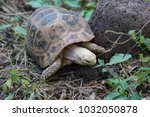 turtle in nature thailand | Shutterstock . vector #1032050878