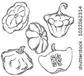 patisson  vegetable  vector