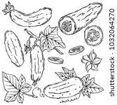 cucumber  vegetable  vector