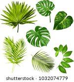 tropical leaves vector herbal...