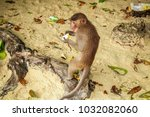 monkey eating a banana and... | Shutterstock . vector #1032082060