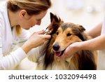 team of veterinarian check sick ... | Shutterstock . vector #1032094498
