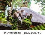 family of monkeys near tample... | Shutterstock . vector #1032100750